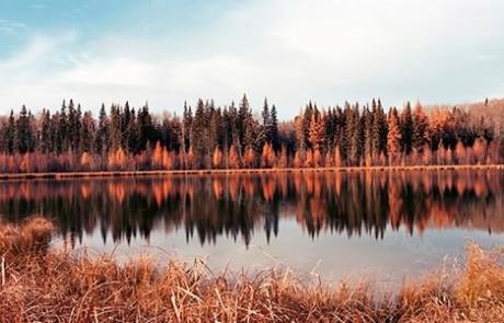 Roberta Bondar - Boreal Fall